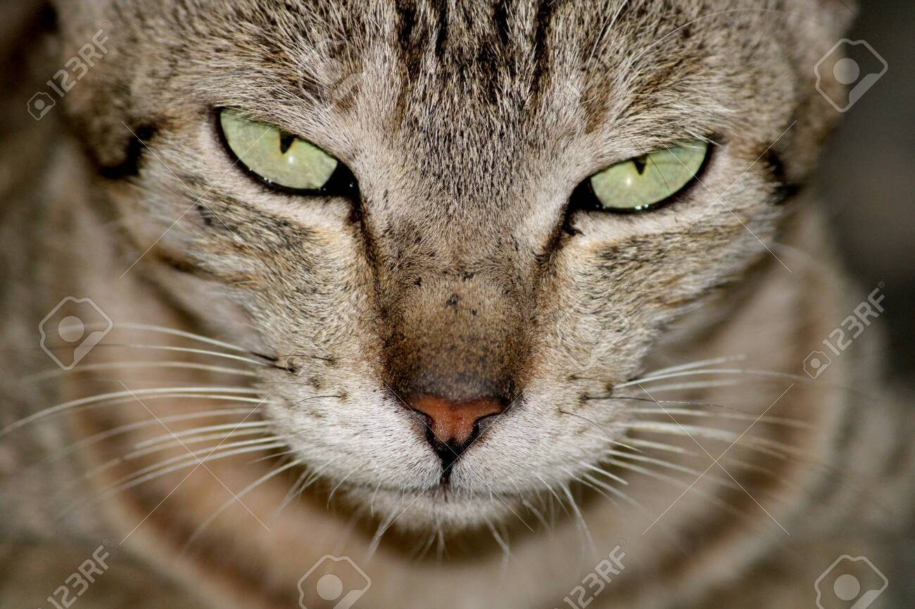 A close-up view of a beautiful cat. - 142823661