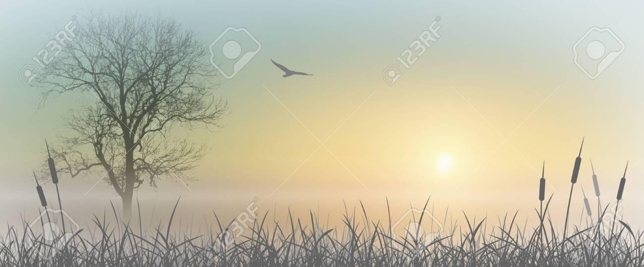 Misty Sunrise Landscape with Reeds Stock Photo - 3719736