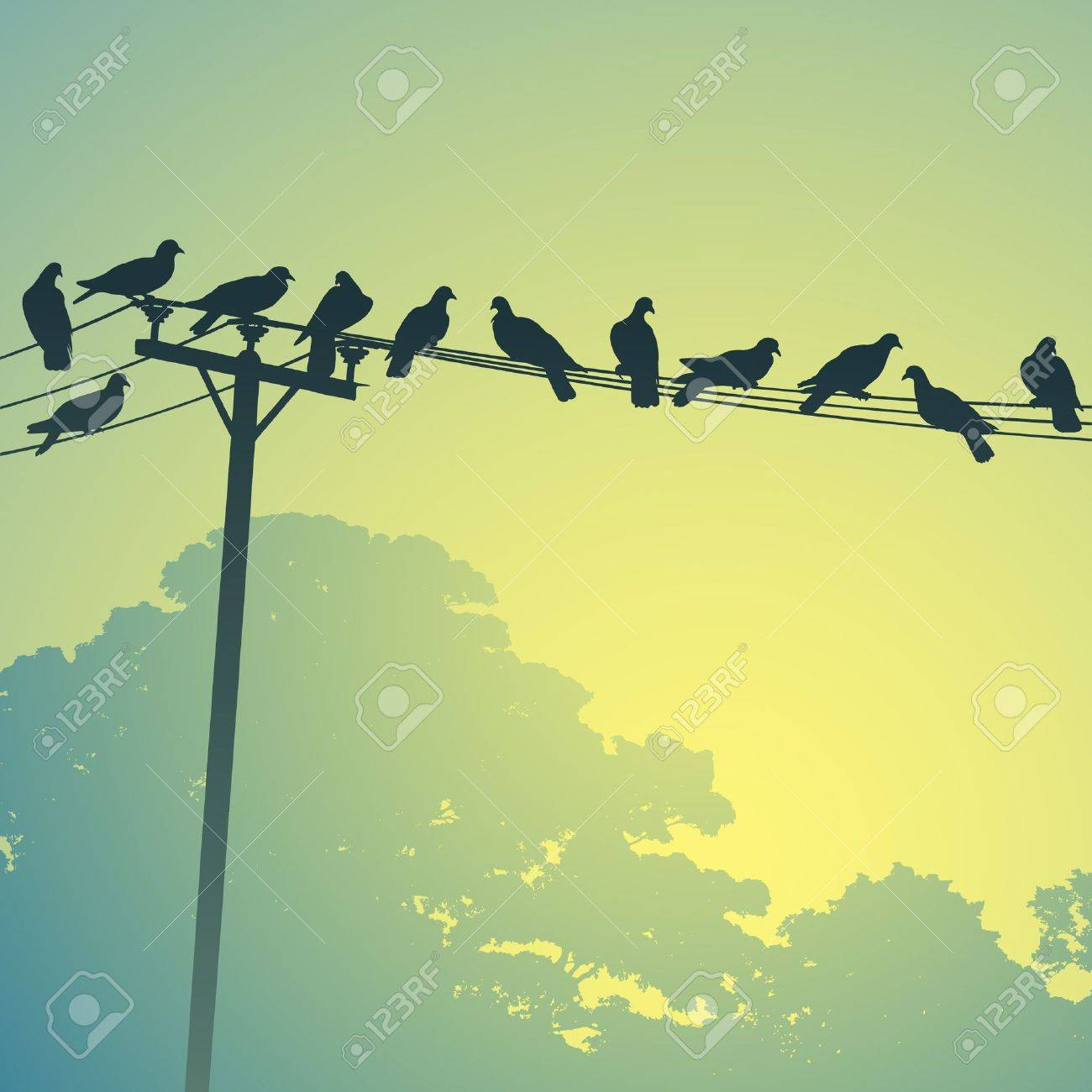 telephone pole : Lots of Birds
