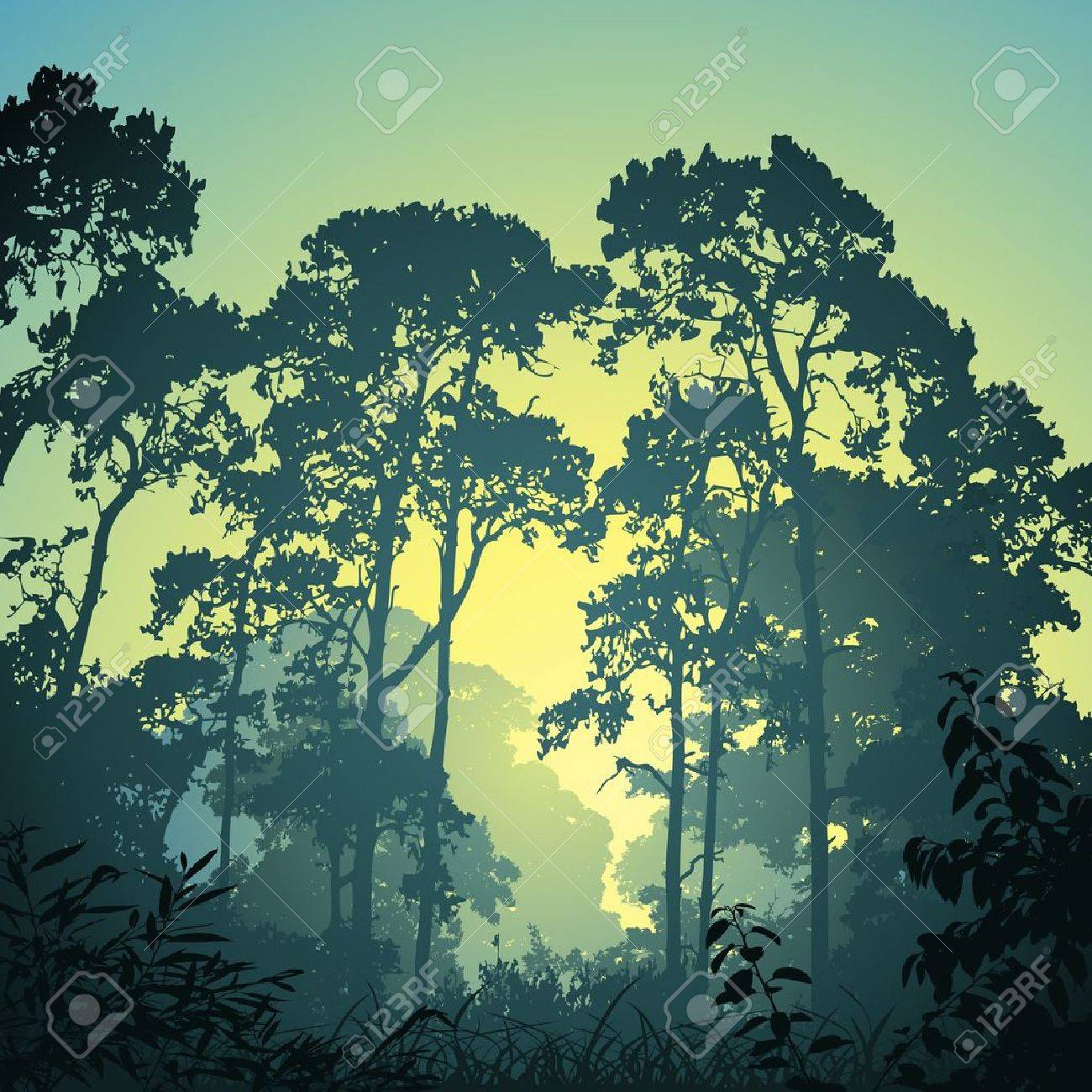 forest trees stock photos royalty free forest trees images and