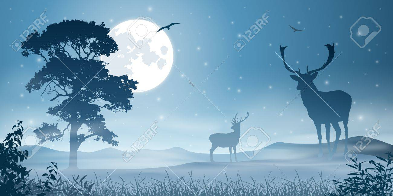 Male Stag Deer on a Misty Meadow with Night Sky and Moon Stock Vector - 16852653