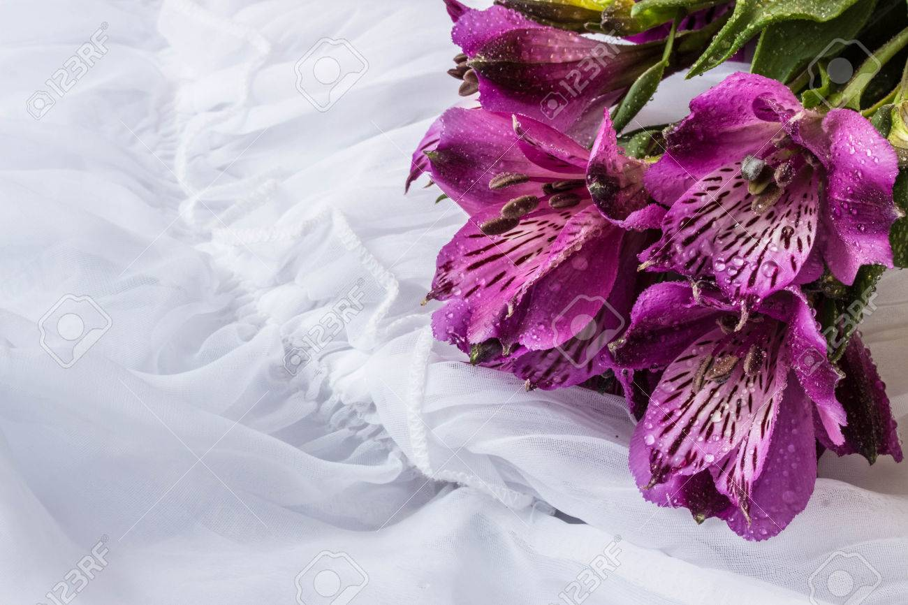 Spring Flower Purple Alstroemeria Peruvian Lily Or Lily Of Stock Photo Picture And Royalty Free Image Image 51270352