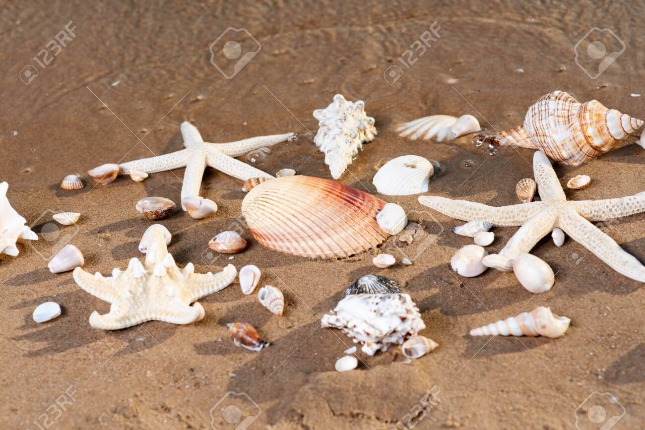 Sea Stars and Sea Shells on wet sand on the beach at sunrise. - 128873534