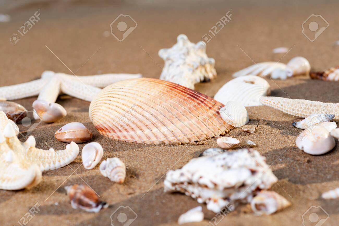 Sea Stars and Sea Shells on wet sand on the beach at sunrise. - 128873531