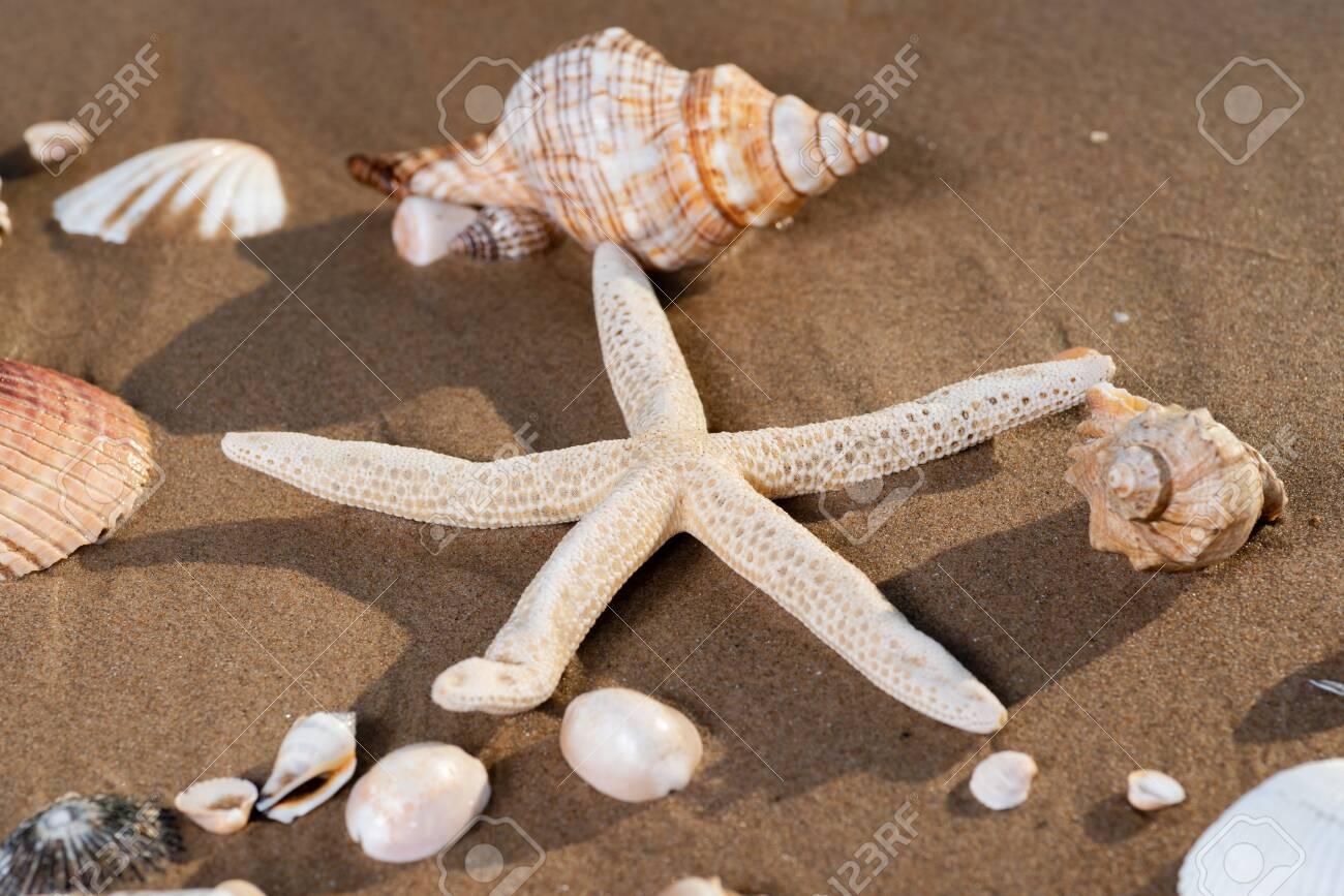 Sea Stars and Sea Shells on wet sand on the beach at sunrise. - 128873501