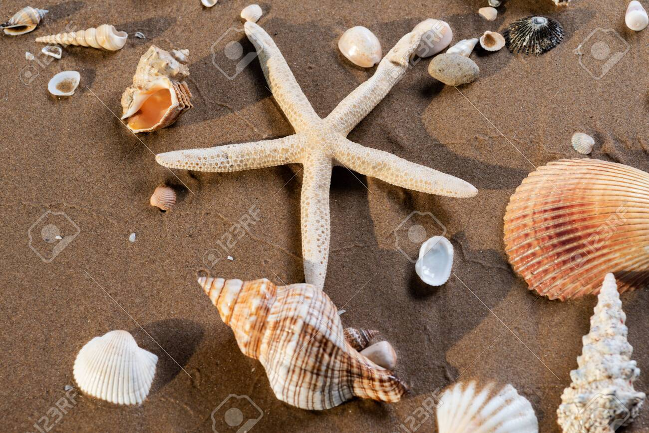 Sea Stars and Sea Shells on wet sand on the beach at sunrise. - 128873511