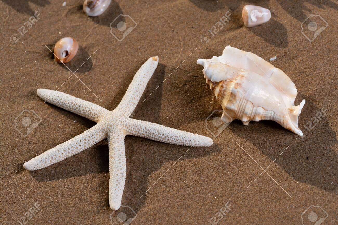 Sea Stars and Sea Shells on wet sand on the beach at sunrise. - 128873510