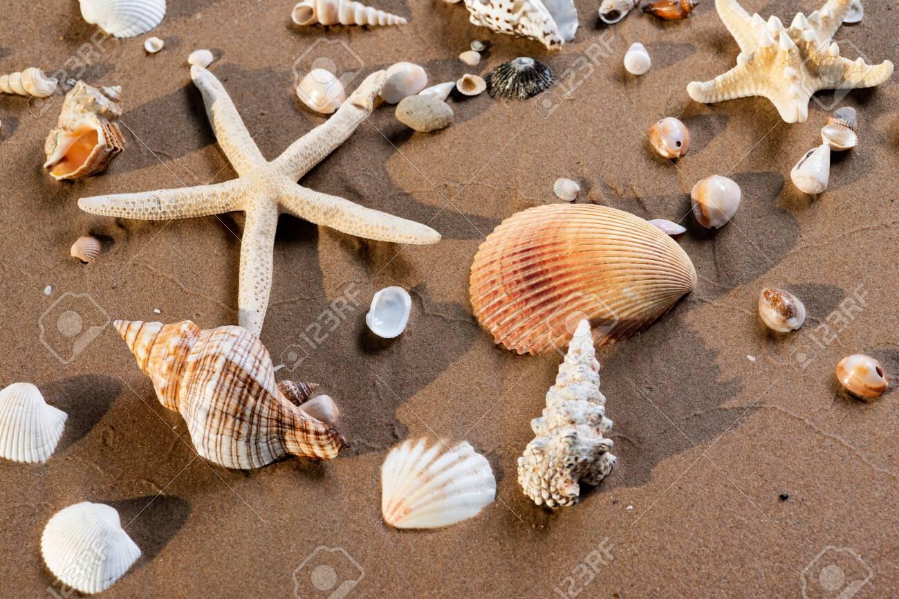 Sea Stars and Sea Shells on wet sand on the beach at sunrise. - 128873506