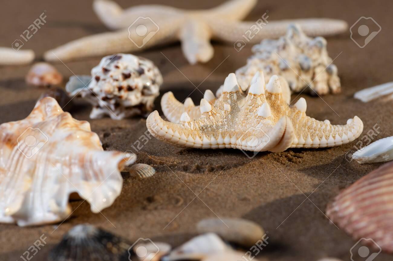 Sea Stars and Sea Shells on wet sand on the beach at sunrise. - 128873512