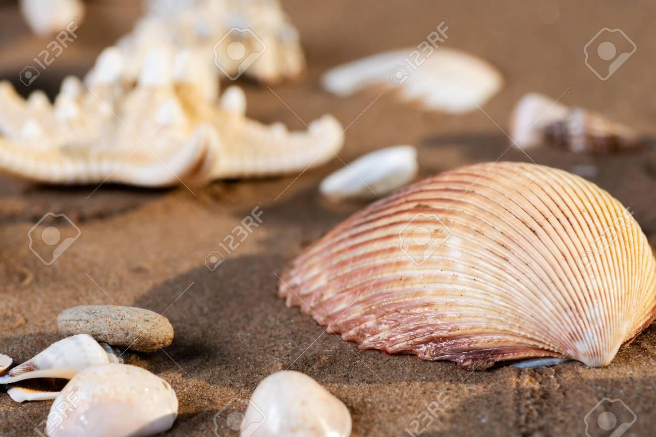 Sea Stars and Sea Shells on wet sand on the beach at sunrise. - 128873459
