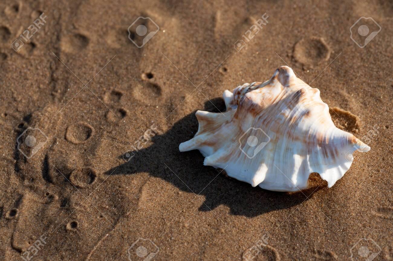 Summer time concept with Sea Shells on wet sand near the water on the beach at sunrise. - 128873461
