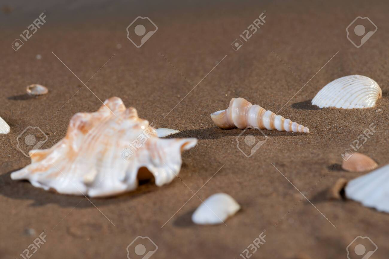 Summer time concept with Sea Shells on wet sand near the water on the beach at sunrise. - 128873460