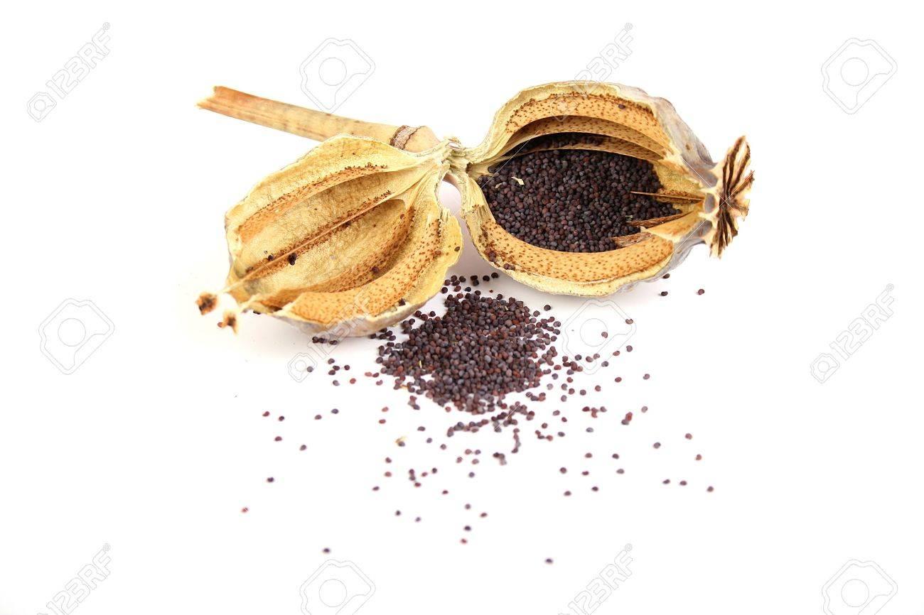 Dried Opium Poppy