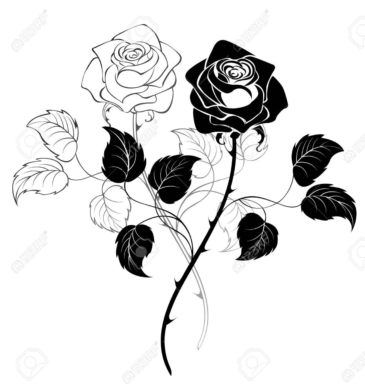 Two Artistically Drawn Roses On A White Background Royalty Free ...