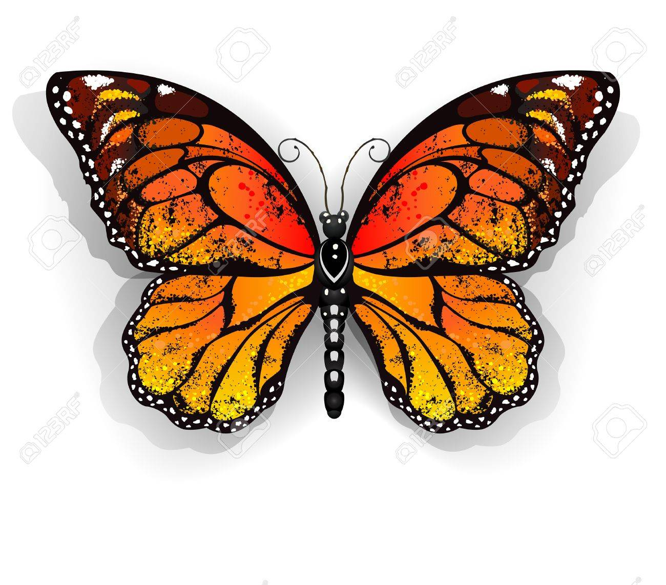 Dibujo Mariposa Realista