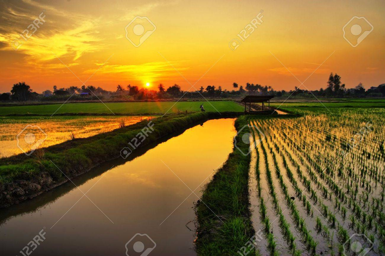 Sunset over green rice farm in Thailand Stock Photo - 9399585