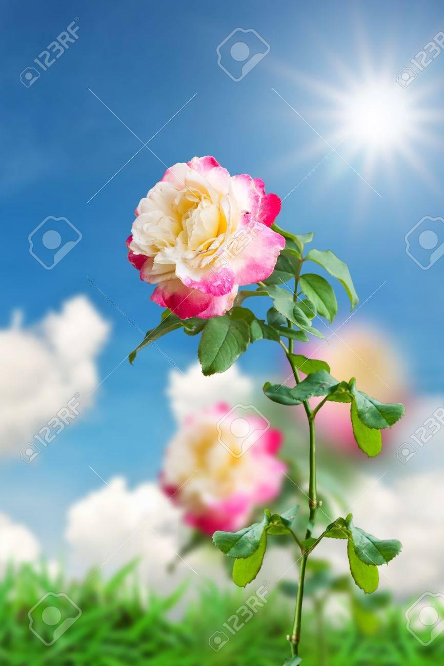 magnifique fleur rose sur fond de paysage banque d'images et