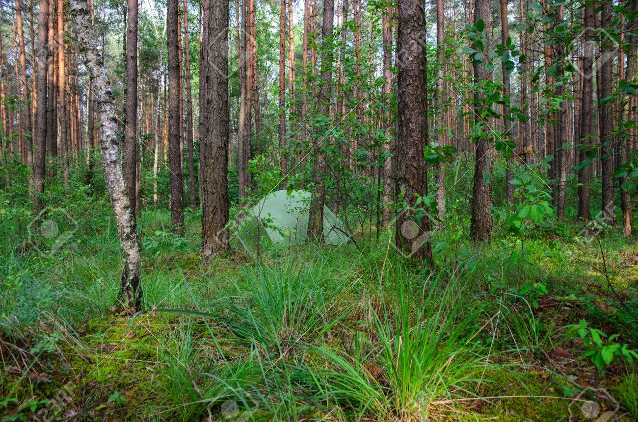 Hidden In Forest Pitched Tent Example Of Stealth Camping Stock