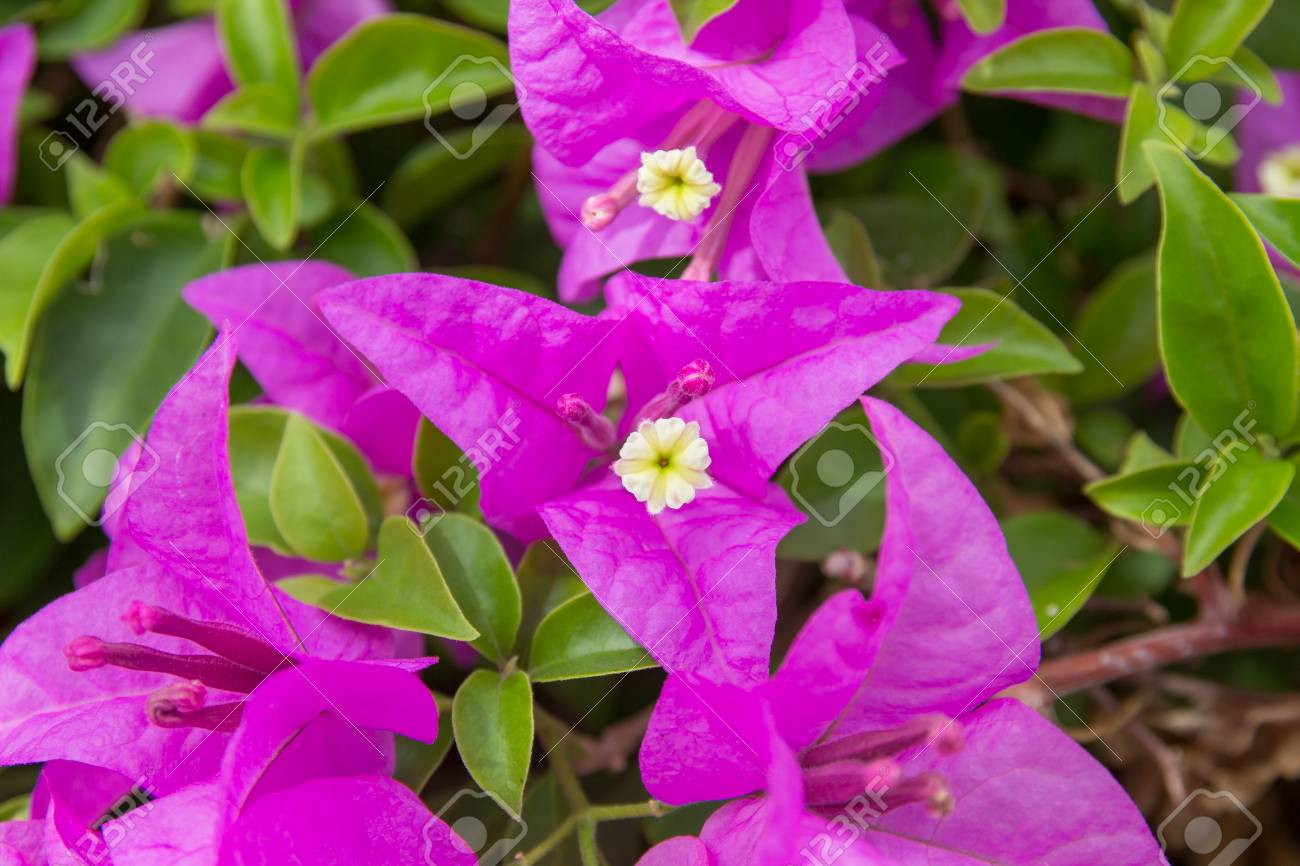 Pinks Flower Stock Photo Picture And Royalty Free Image Image