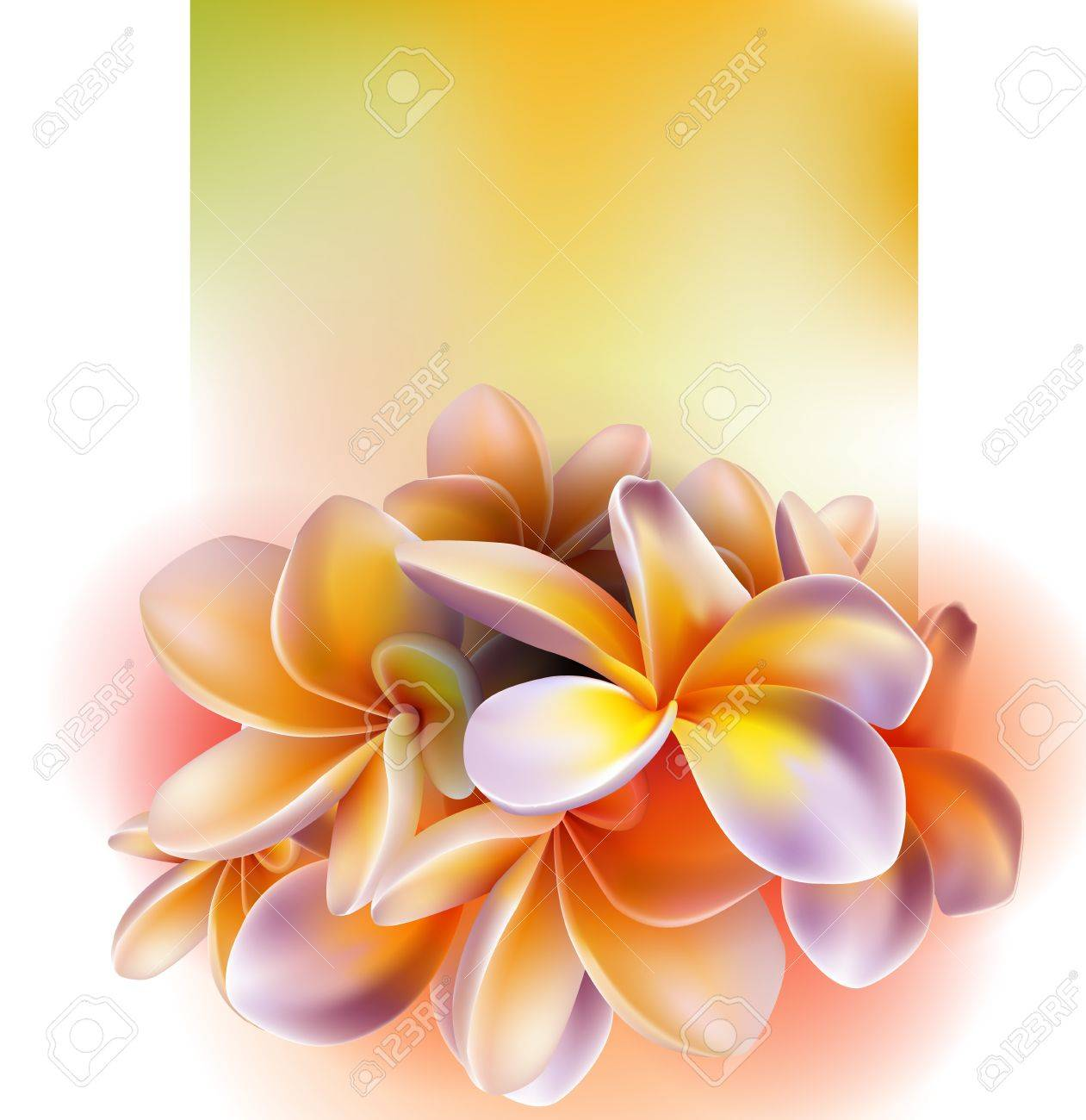 Frangipani flowers Stock Vector - 17363033