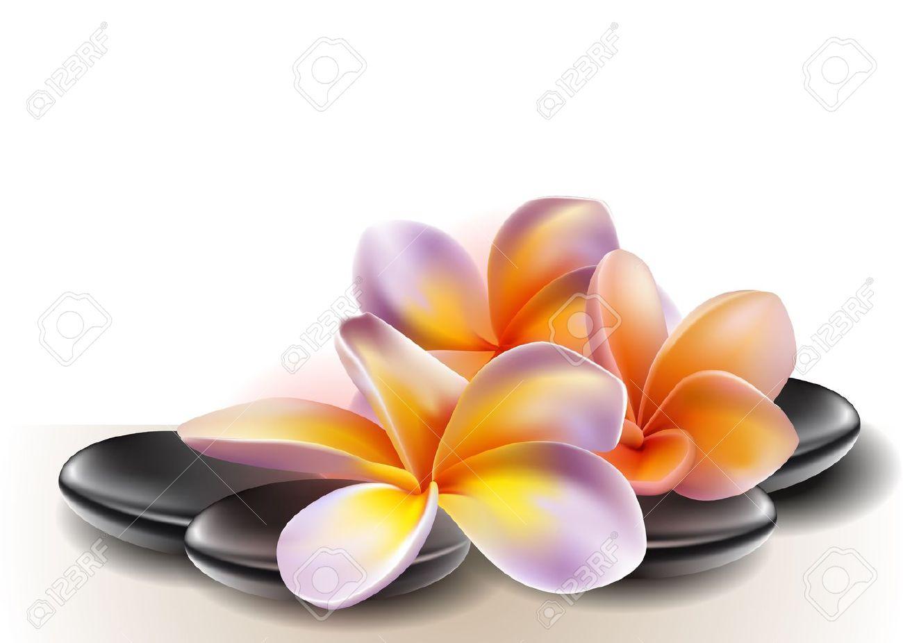 Banque dimages , Pierres concept de spa zen avec fleurs de frangipanier