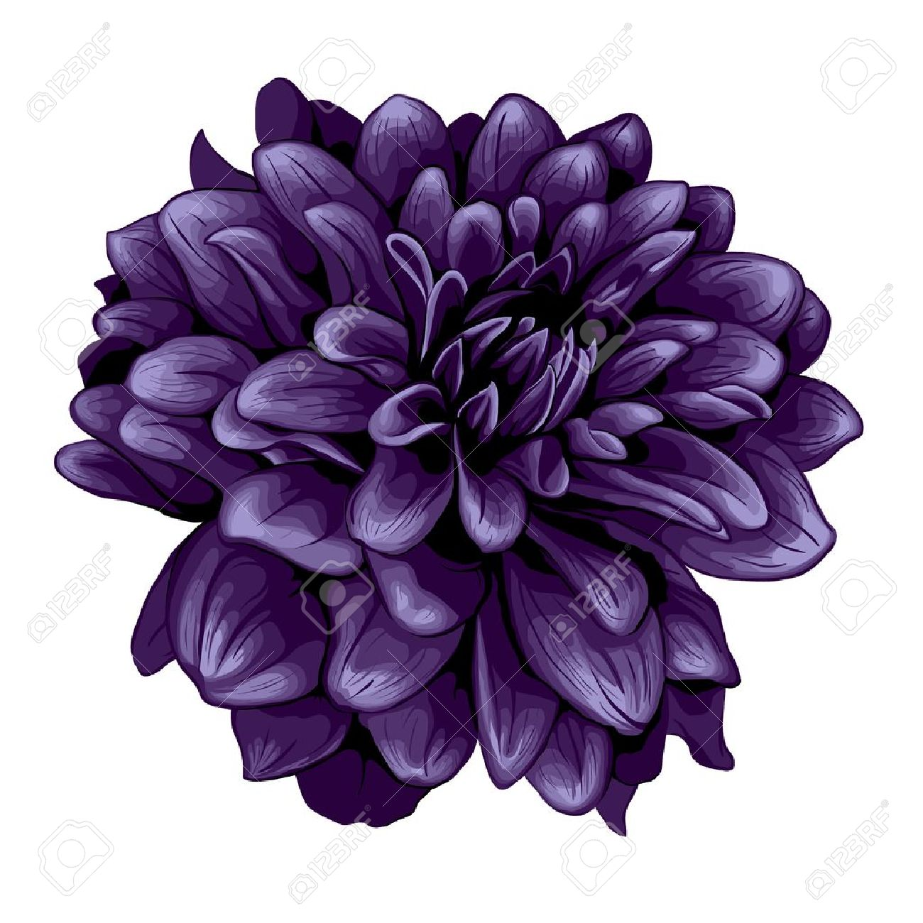 Dahlia illustration Stock Vector - 17695398