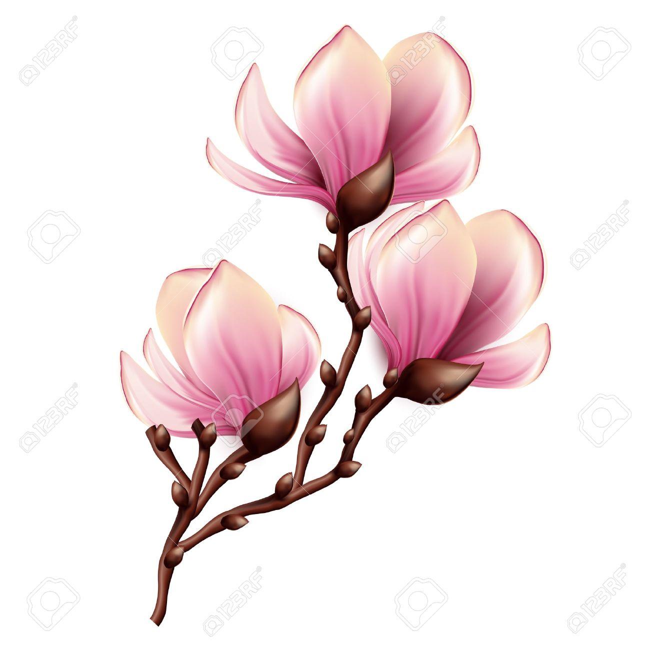 4 906 magnolia stock vector illustration and royalty free magnolia rh 123rf com magnolia clipart black and white magnolia market clipart