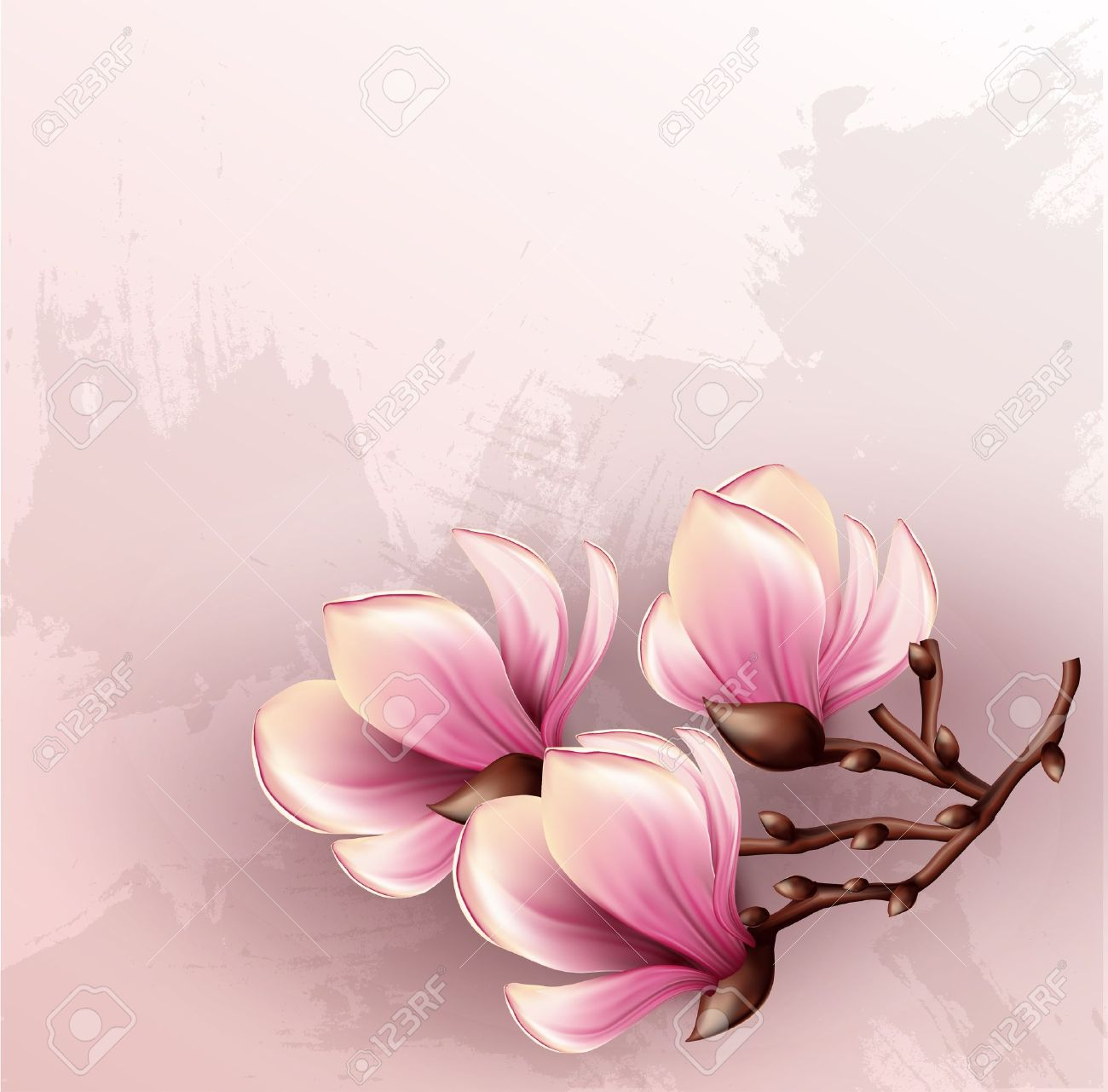Magnolia branch isolated - 20278946