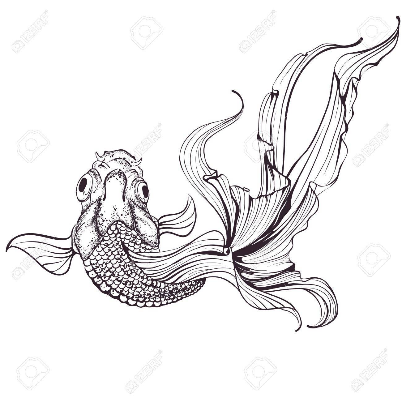 Goldfish sketch on white background - 21563437