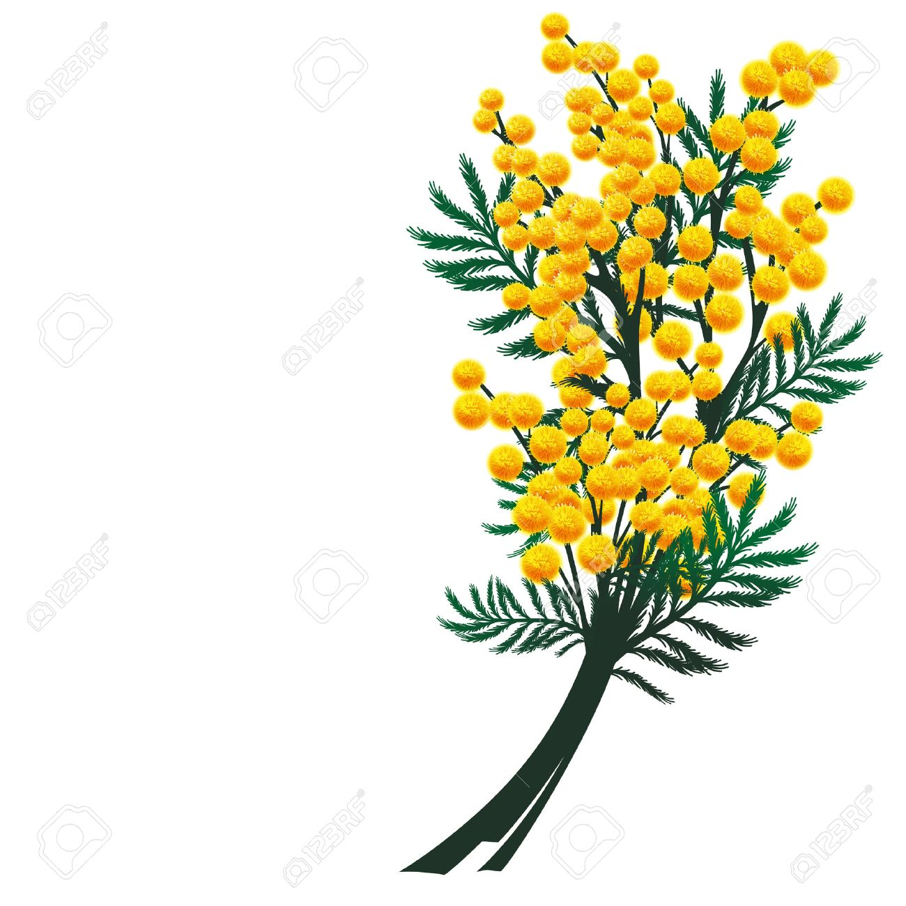 Mimosa flowers - 25042079