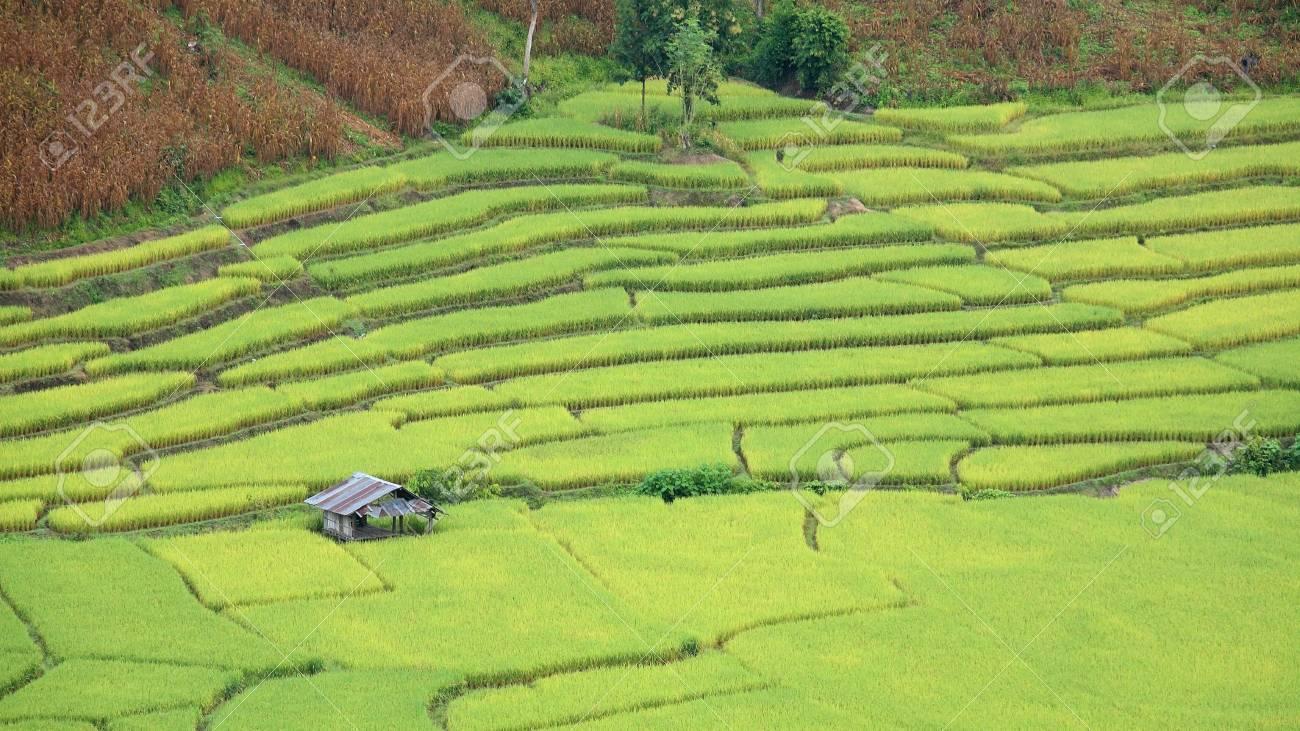 Vista Aérea De La Casa De Campo En Terrazas De Arroz En El Norte De Tailandia