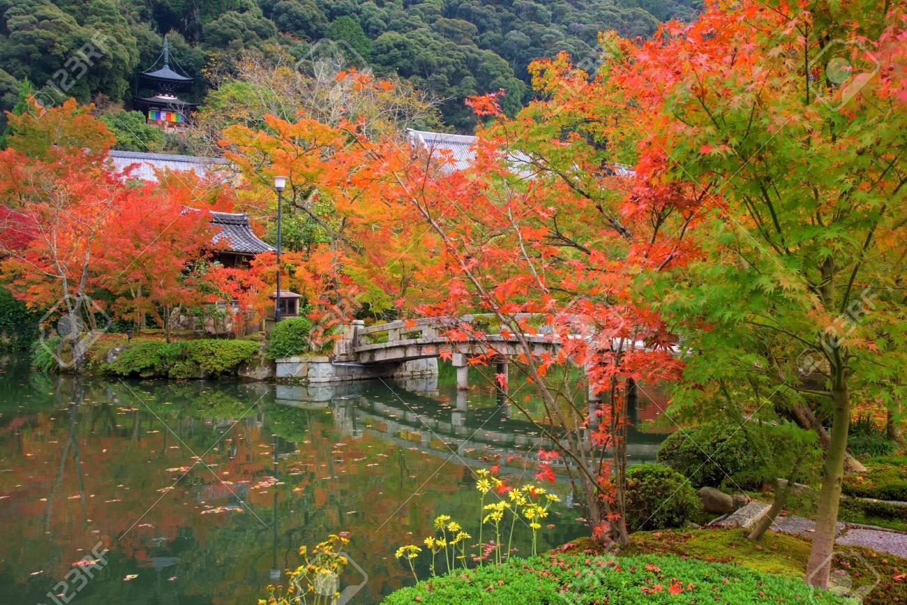 永観寺京都で秋の紅葉の庭。 ロ...