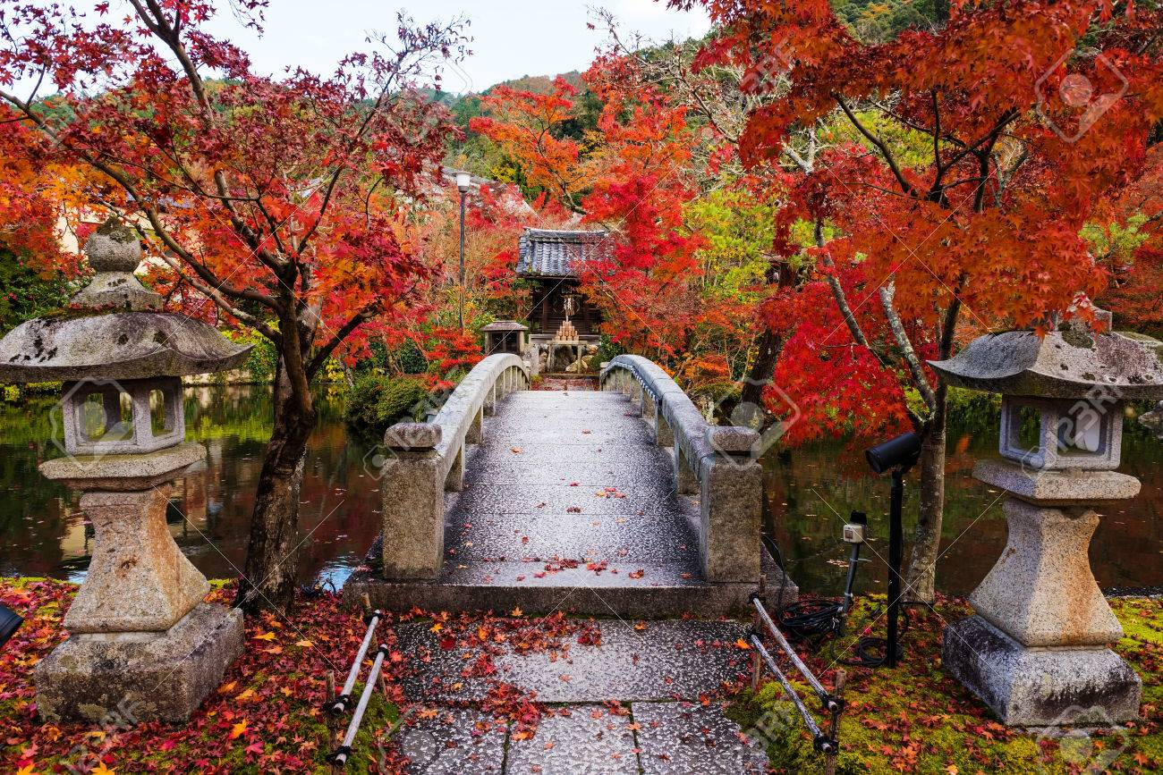 Autumn Gardens Colors Of Eikando Temple, Kyoto, Japan. Here Is ...