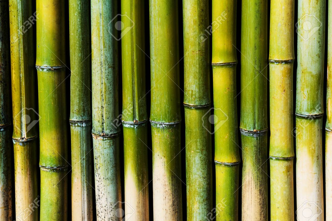 Green Bamboo wall for textured nature abstract background