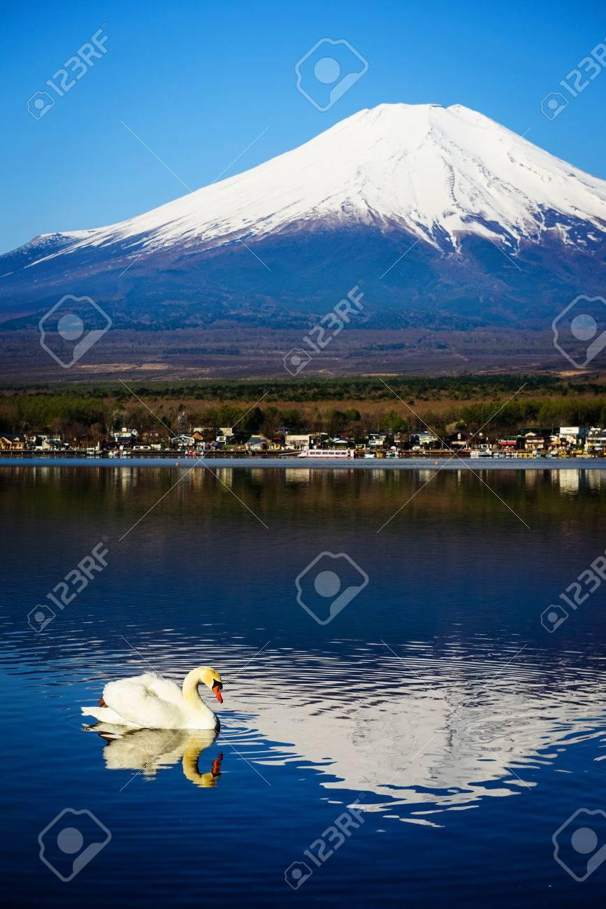 山梨県 富士山を望む山中湖の白鳥の白します 縦の写真を壁紙に の
