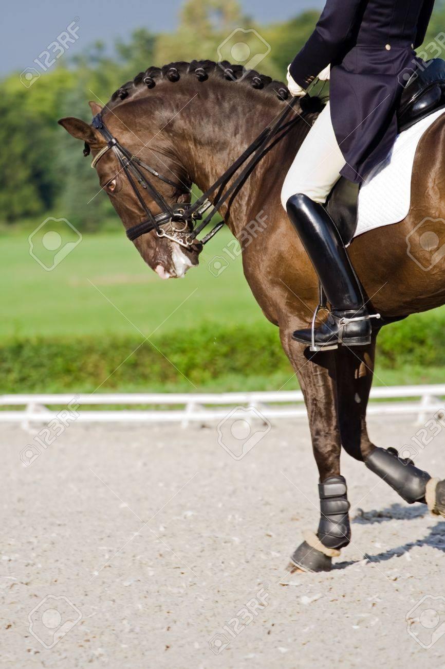 Doma de caballos al aire libre durante tiempo tormentoso  Foto de archivo - 7944199