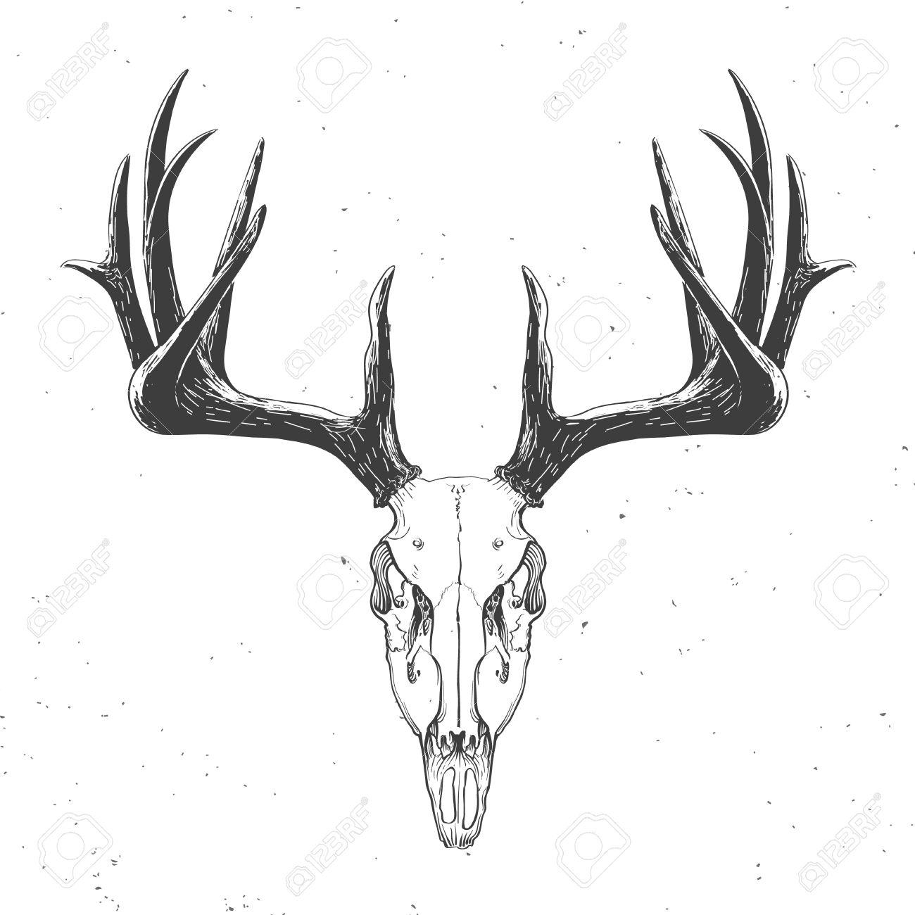 Deer Skull On White, Vintage Illustration Royalty Free Cliparts ...