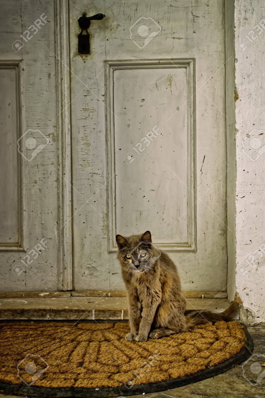 Scary Old Cat Sitting In Front Of An Old Door Stock Photo Picture