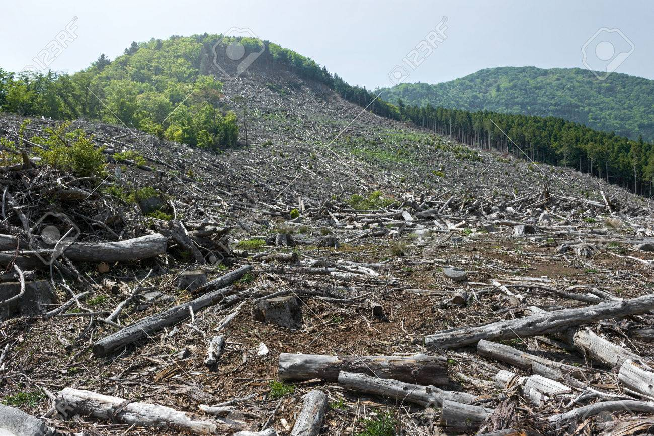 Forest felling, environmental destruction and global warming. - 50144316