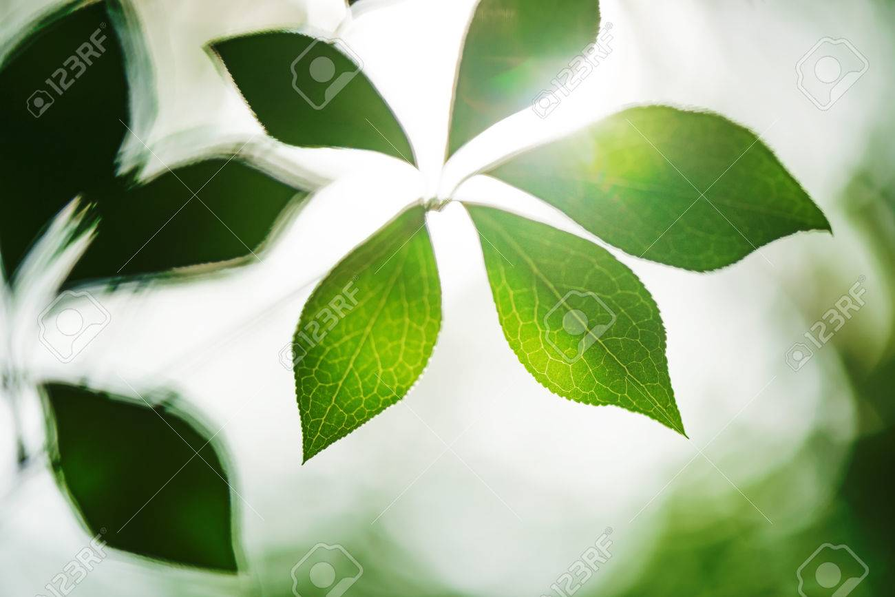 Leaf and vein. Photosynthesis and ecology - 72083185