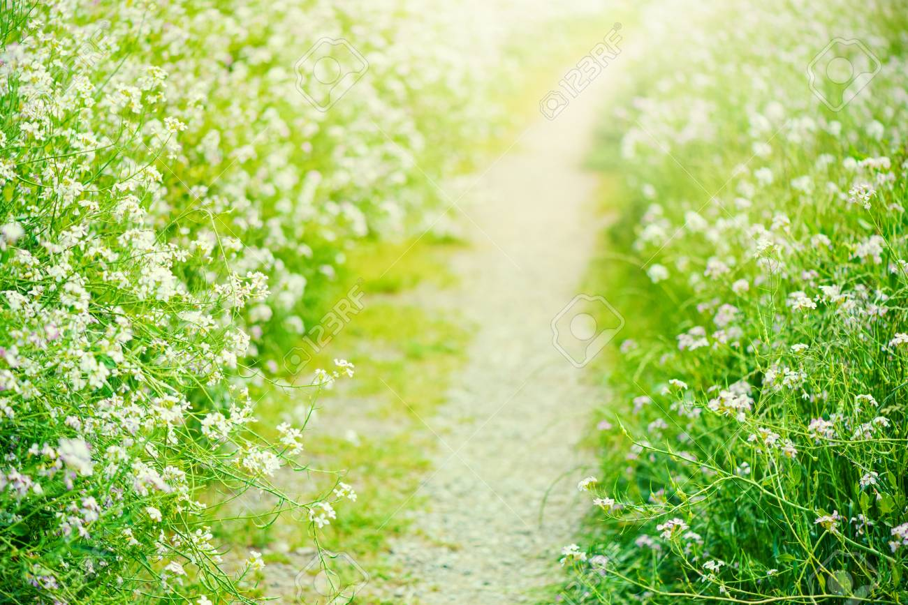 Pathway where flowers bloom, - 75315531