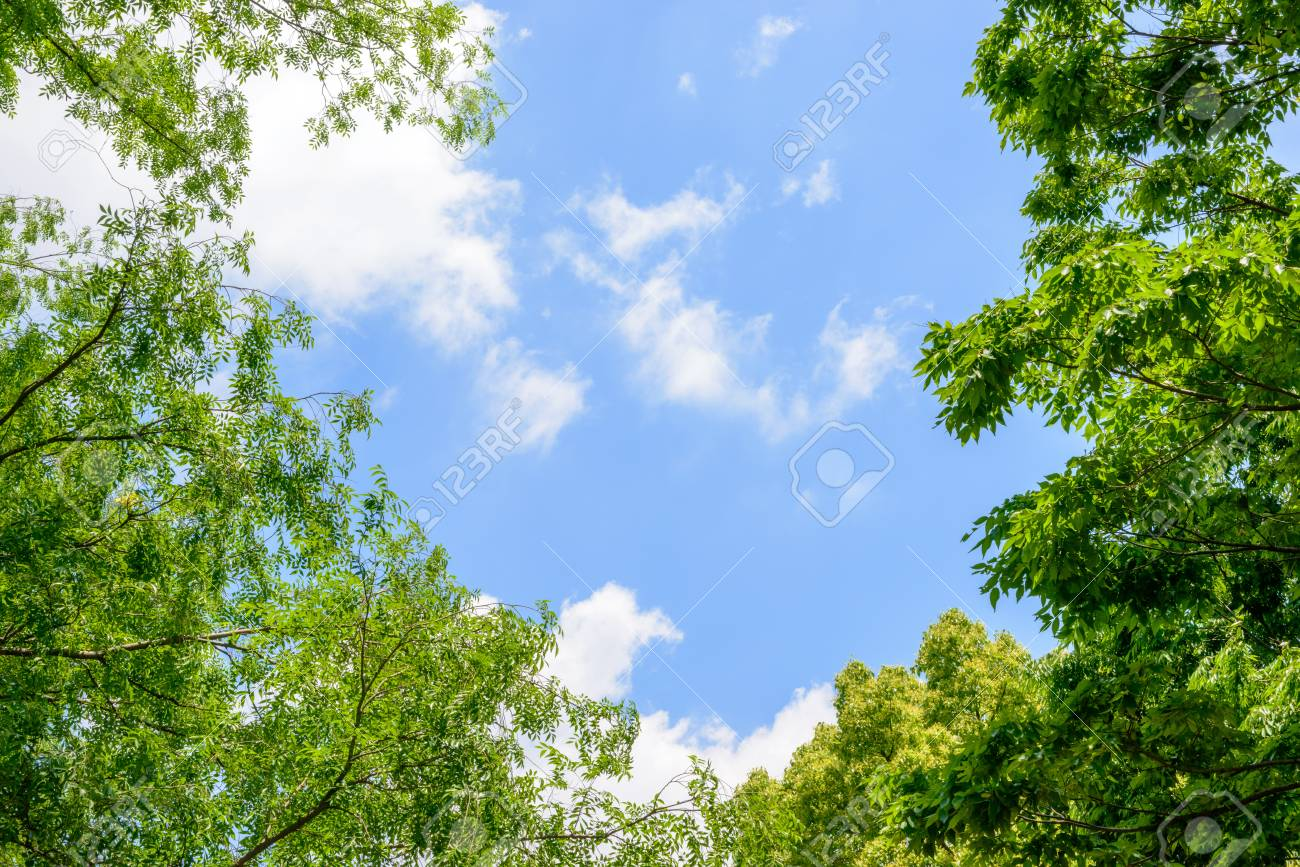 Fresh green trees and blue sky and clouds - 78529642