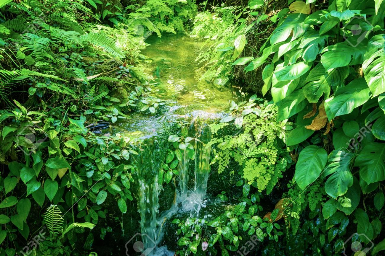 Waterside plants. Tropical plants. - 81794547