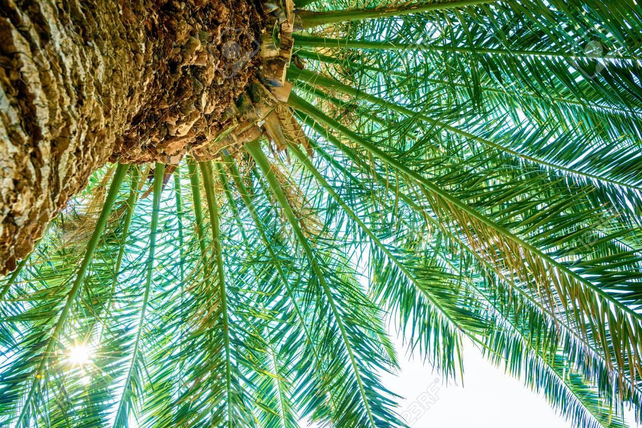 Tropical plant - 81794550
