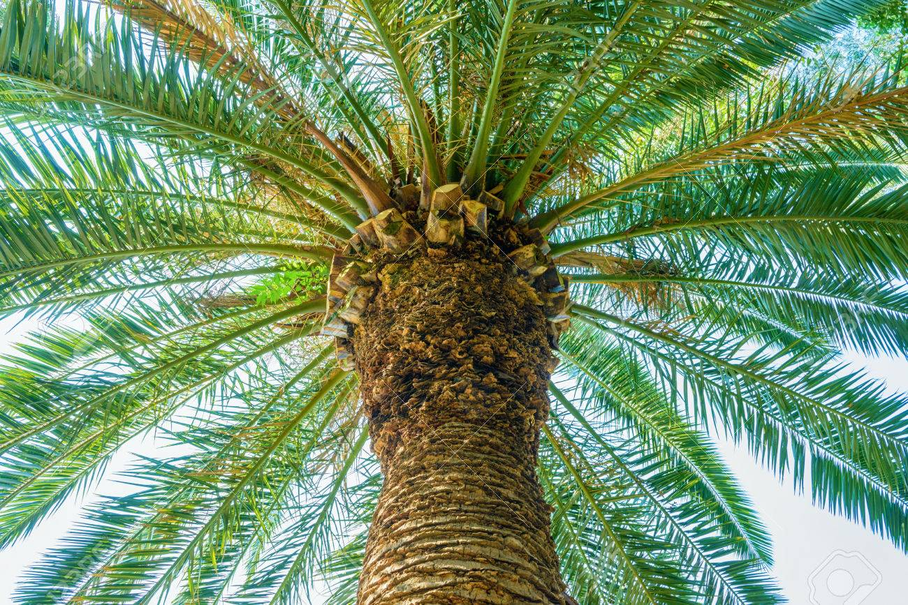 Tropical plant - 81794555
