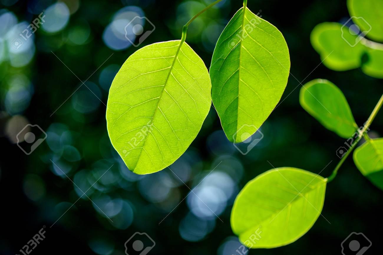 Fresh green leaves. - 81794560