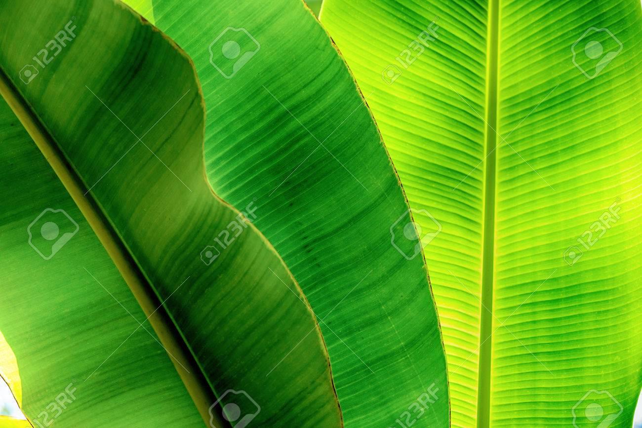 Tropical plant - 81794556