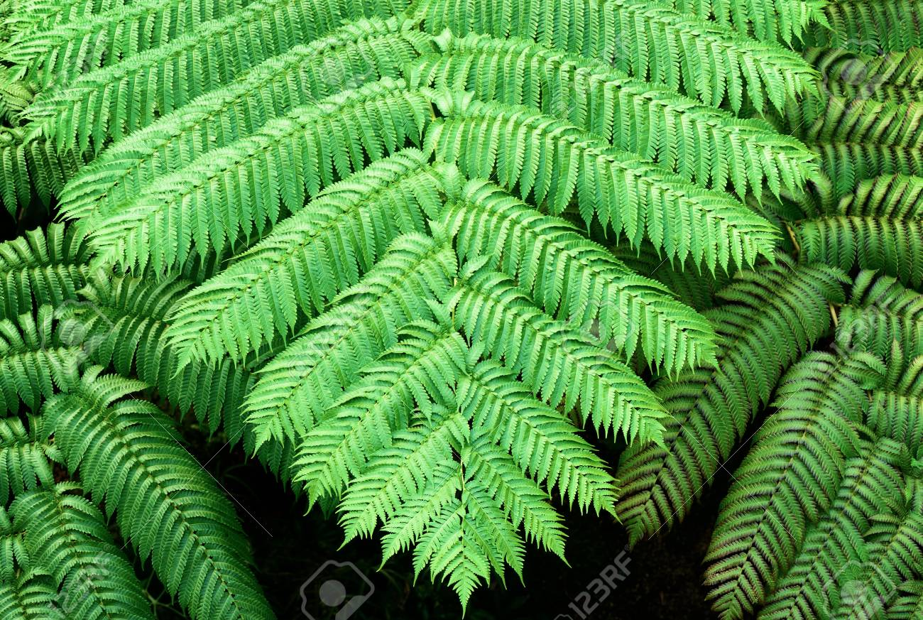 Tropical plants. Ferns. - 81794539