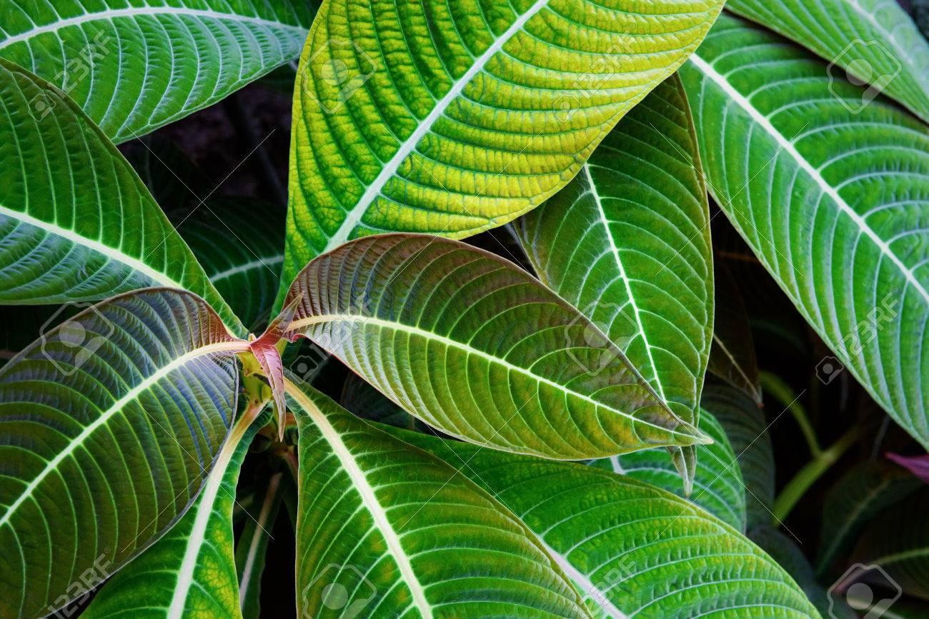 Tropical plants - 81794540