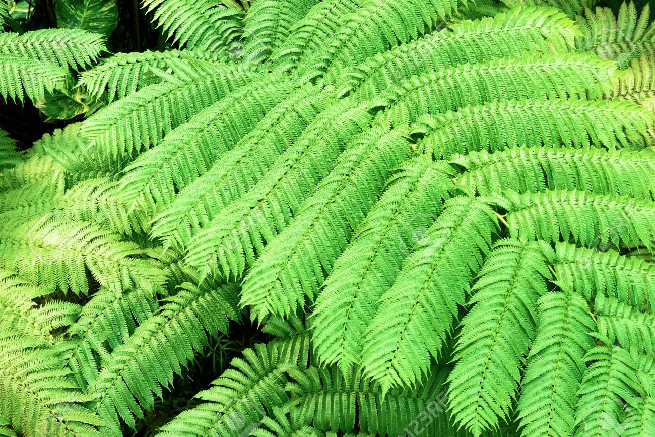 Tropical plants. Ferns. - 81794541